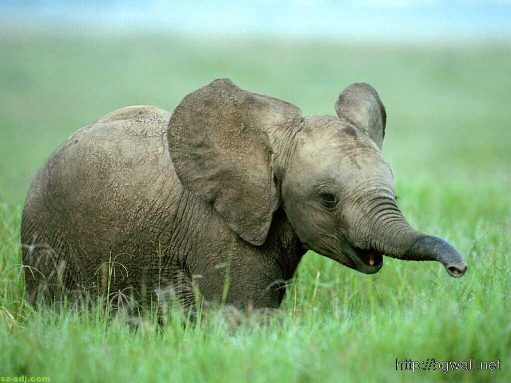 Baby elephants desktop wallpaper background wallpaper hd - Baby elephant wallpaper ...