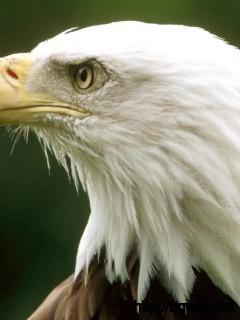 bald-eagle-eye-wallpaper