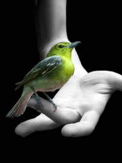 beautiful-bird-on-hand-wallpaper