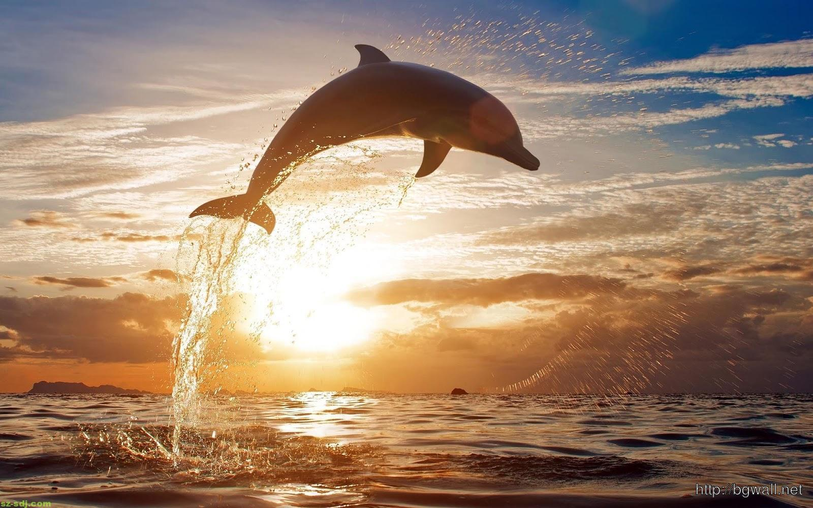 beautiful-dolphin-wallpaper-image