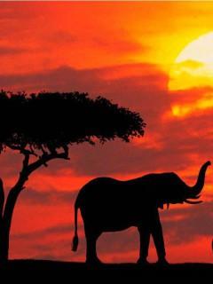 beautiful-elephants-wallpaper-for-desktop