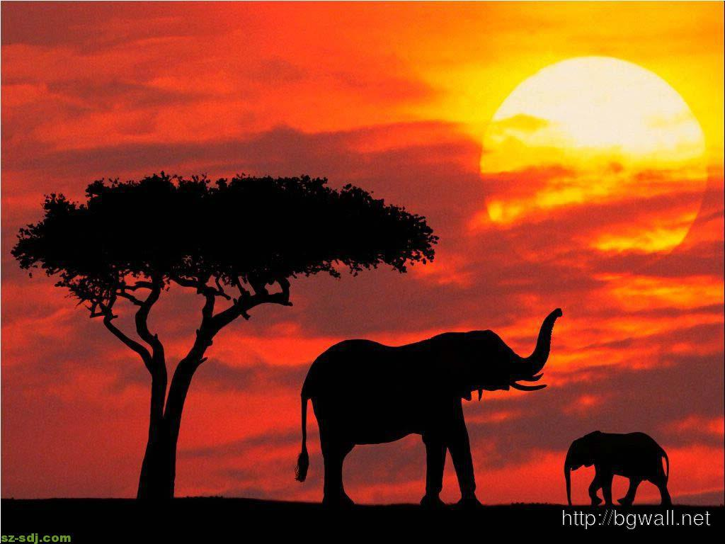 Beautiful Elephants Wallpaper For Desktop