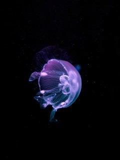 beautiful-purple-jellyfish-wallpaper-for-desktop