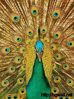 beautiful-yellow-peacock-wallpaper-hd