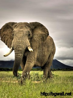 best-3d-elephants-wallpaper