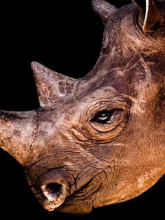 best-photos-animals-rhino-wallpaper-pc