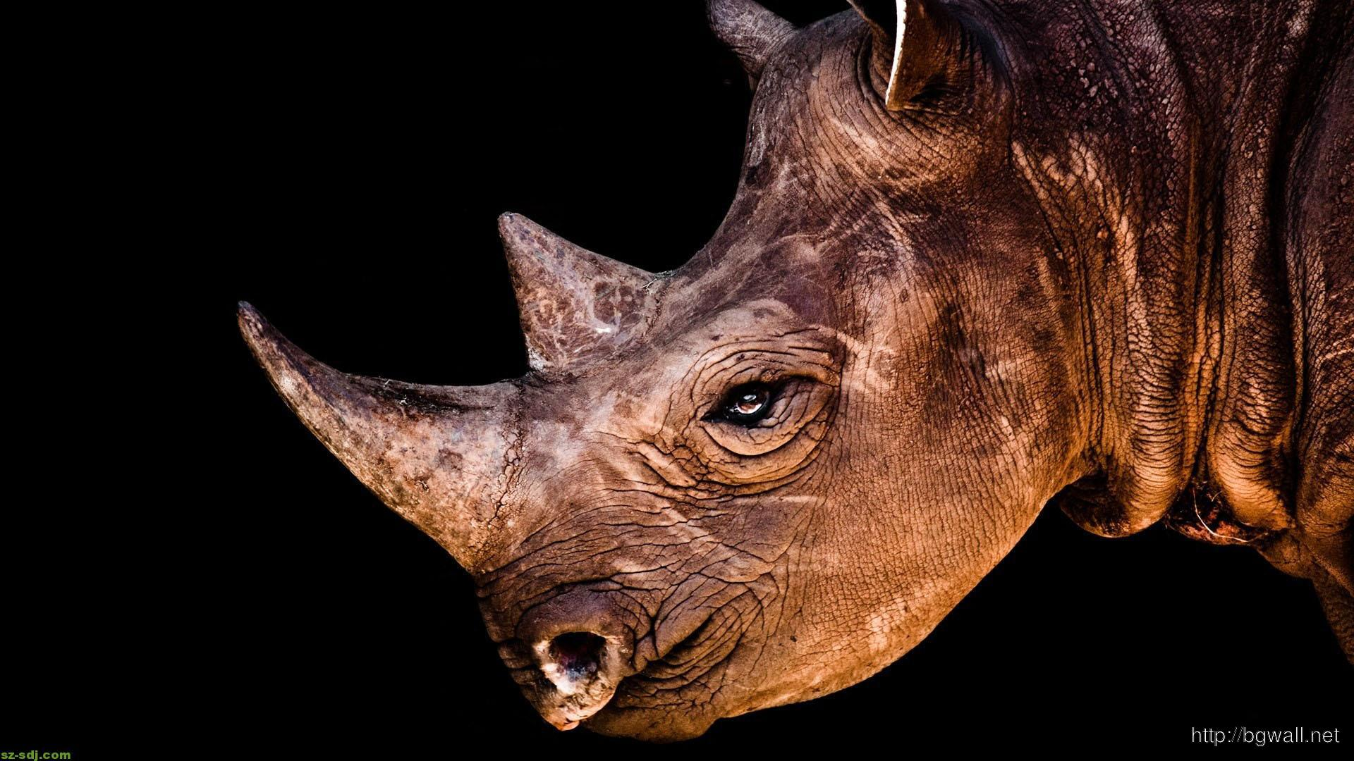 best-photos-animals-rhino-wallpaper-pc