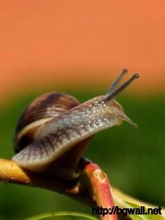 best-snail-macro-wallpaper-hd