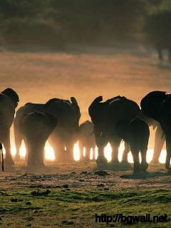 big-elephants-family-wallpaper