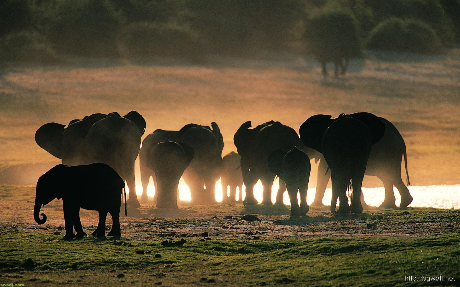 big-elephants-family-wallpaper