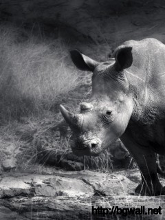 black-and-white-rhino-wallpaper