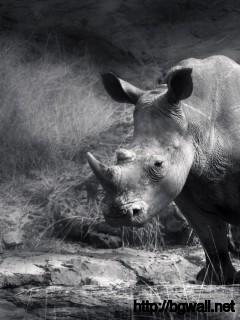 black-and-white-rhino-wallpaper