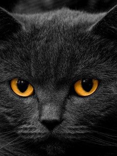 black-cat-face-and-eyes-close-up-wallpaper-hd
