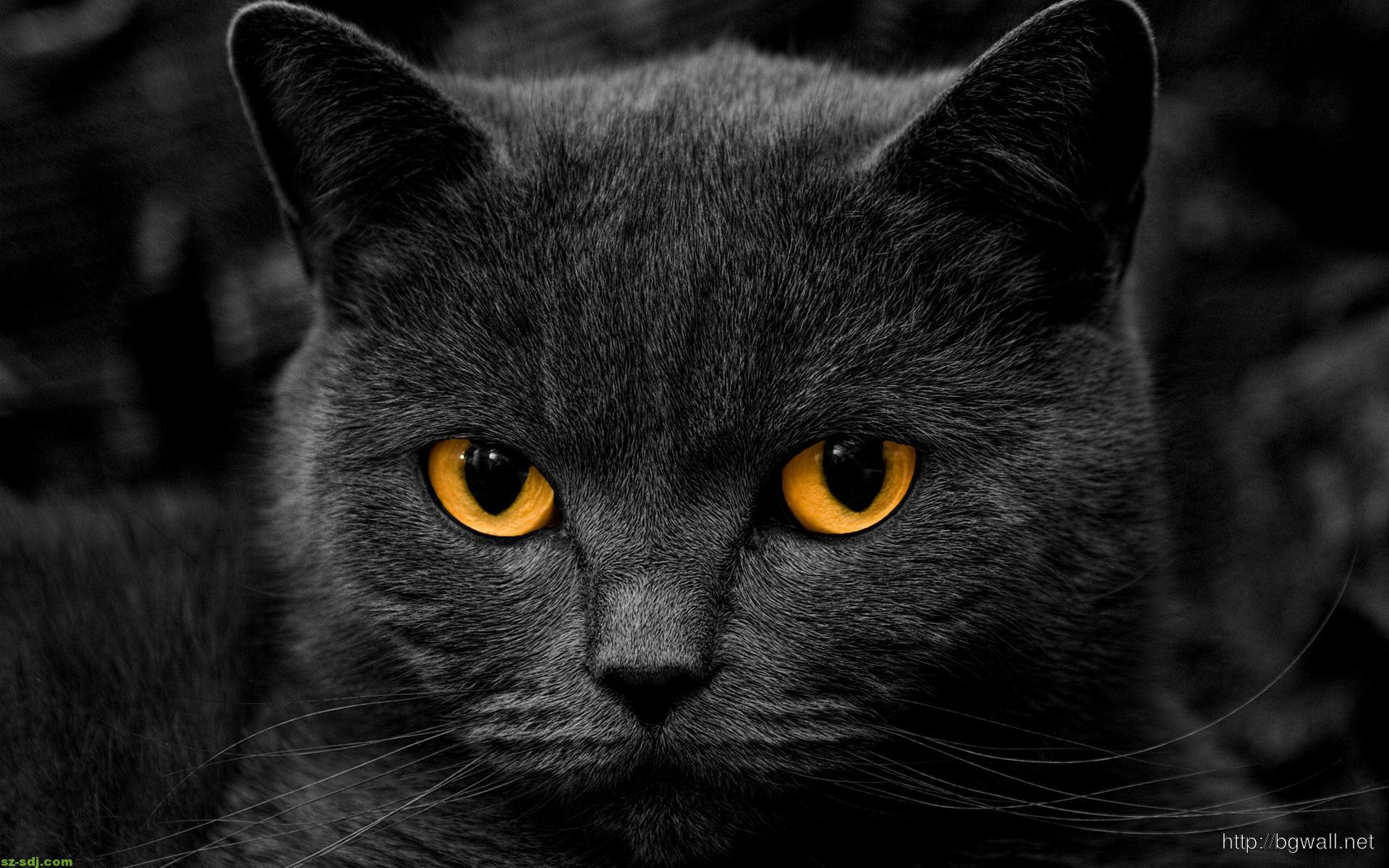 Black Cat Face And Eyes Close Up Wallpaper Hd
