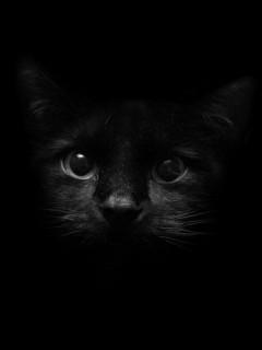 black-cat-face-animals-wallpaper-background