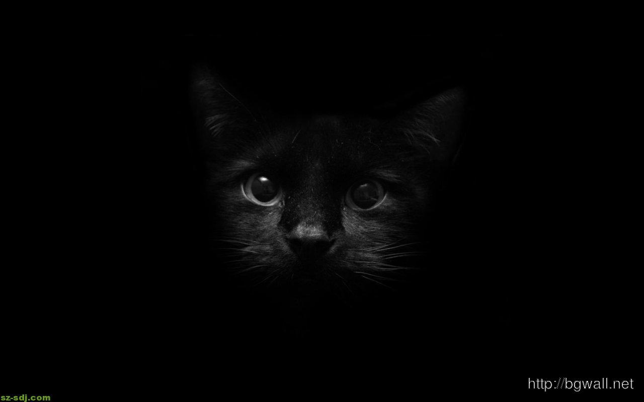 Black Cat Face Animals Wallpaper Background