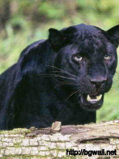 black-panther-wallpaper-photos