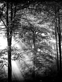 black-white-ray-of-light-wallpaper