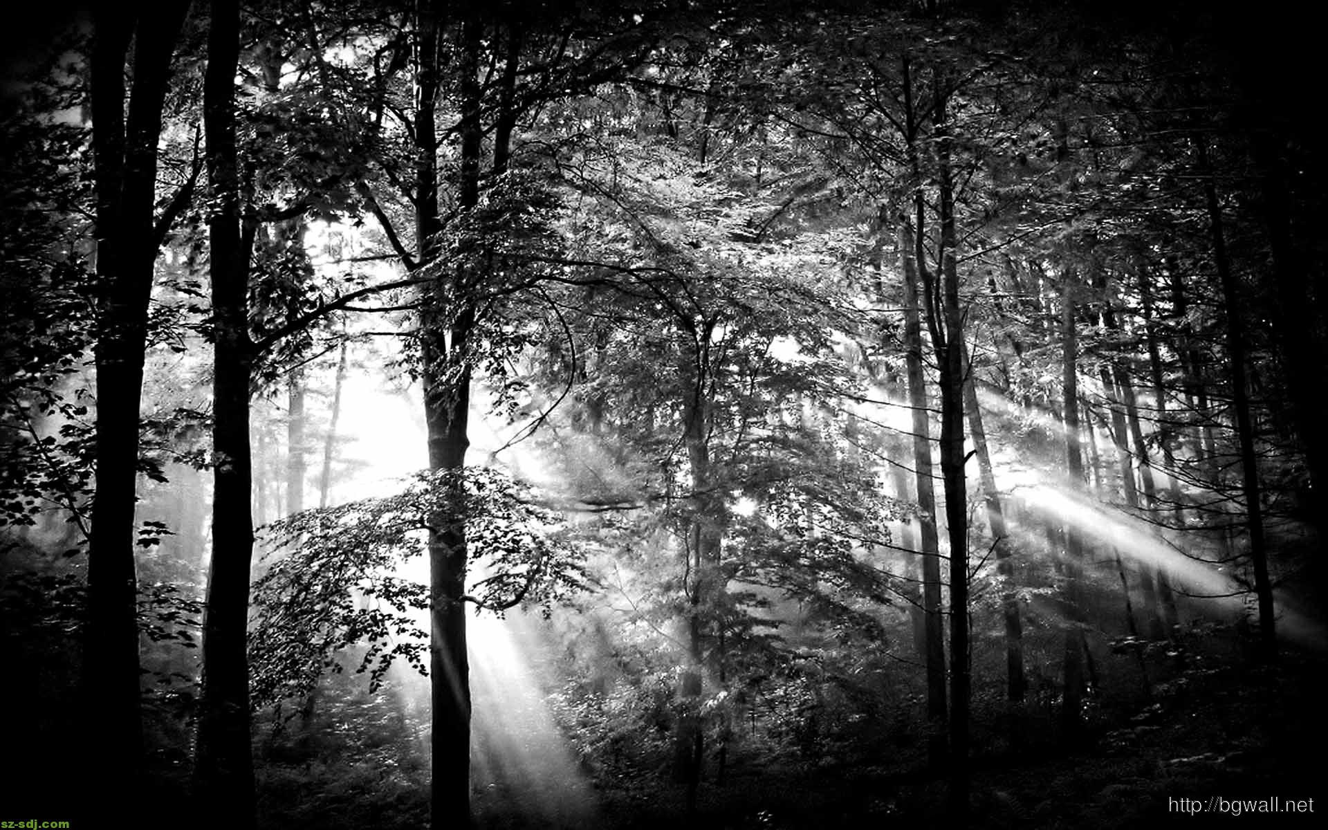Black White Ray Of Light Wallpaper