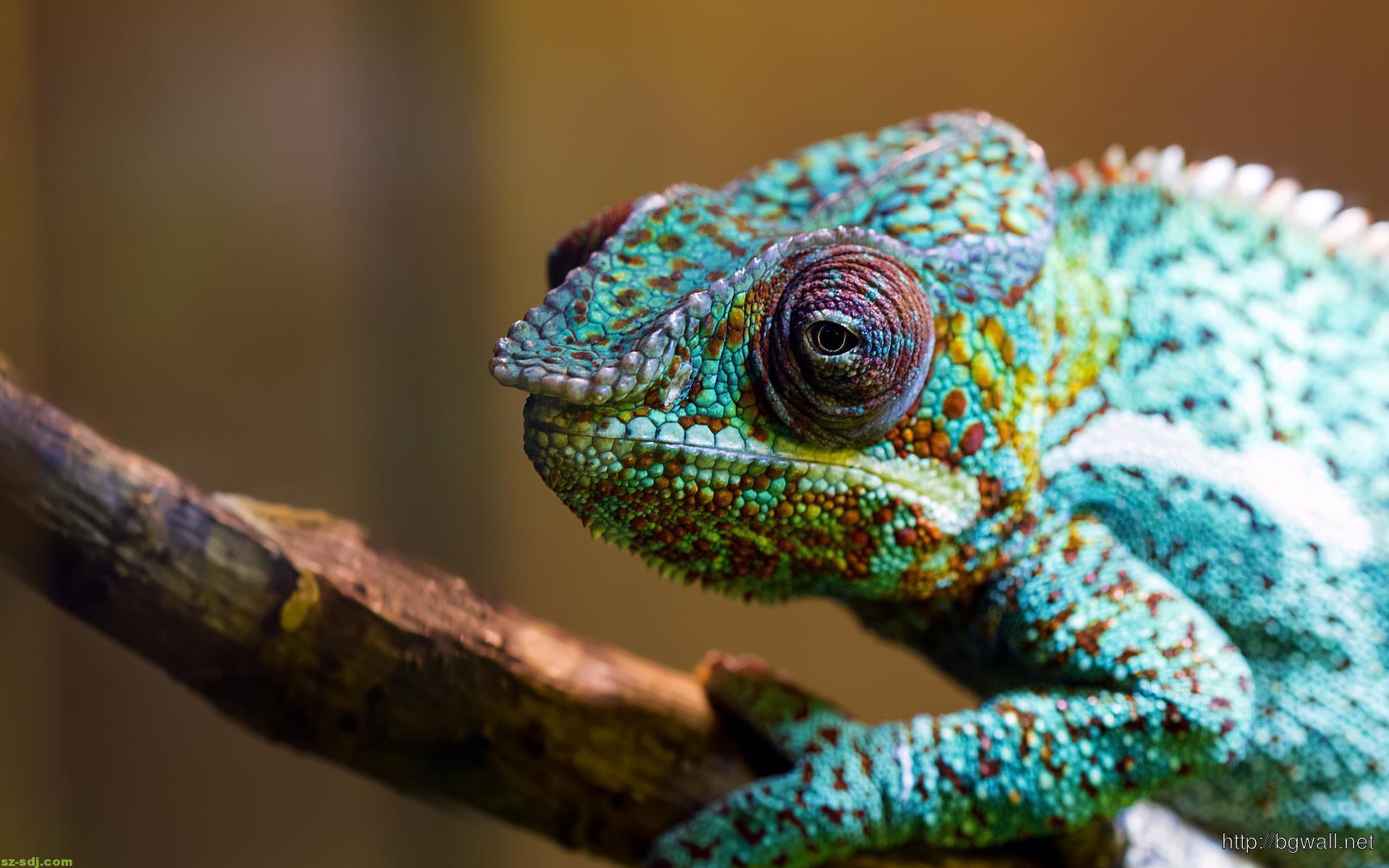 blue-chameleon-wallpaper-1080