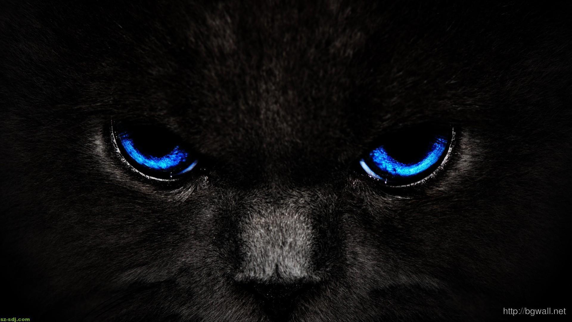blue-eyes-cat-wallpaper-high-definition