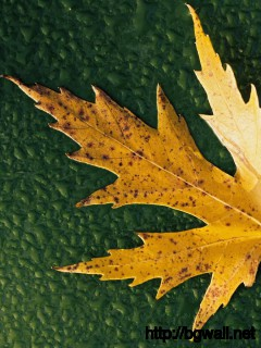 brown-leaf-nature-wallpaper-