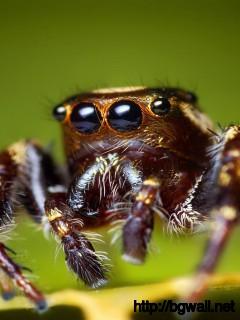 brown-spider-wallpaper-computer