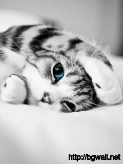 cat-blue-eyes-cute-animal-wallpaper-hd