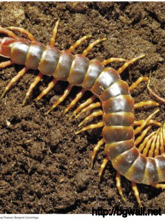centipede-wallpaper-images-hd