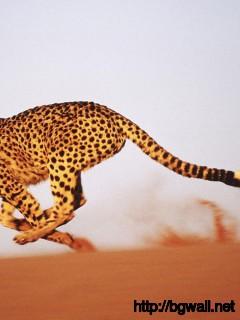 cheetah-running-on-the-desert-wallpaper