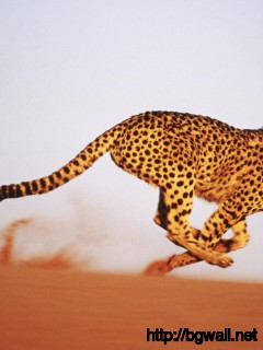 cheetah-running-speed-wallpaper