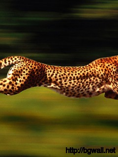 cheetah-running-wallpaper