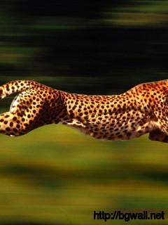 cheetah-running-wallpaper