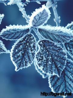 cold-leaves-wide-wallpaper