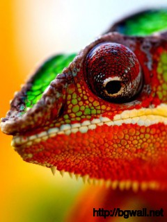 colorful-chameleon-macro-wallpaper-for-desktop