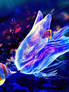 colorful-jellyfish-wallpaper-widescreen