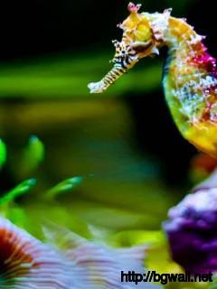 colorful-seahorse-wallpaper-full-hd