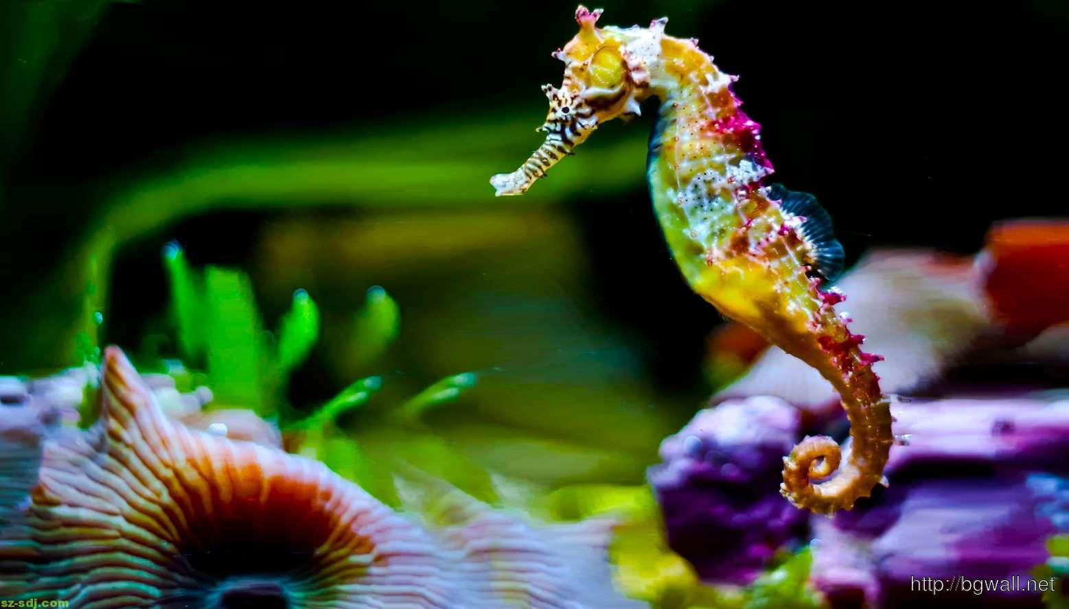 Colorful Seahorse Wallpaper Full Hd Background Wallpaper Hd