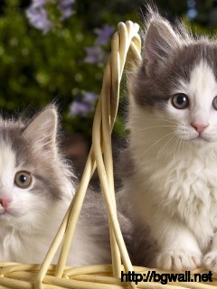 couple-cat-with-big-eye-in-the-basket-wallpaper-pc-desktop
