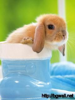 cute-babby-bunnies-wallpaper-desktop-wide