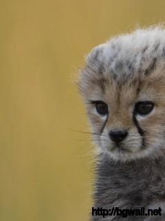 cute-baby-cheetah-wallpaper