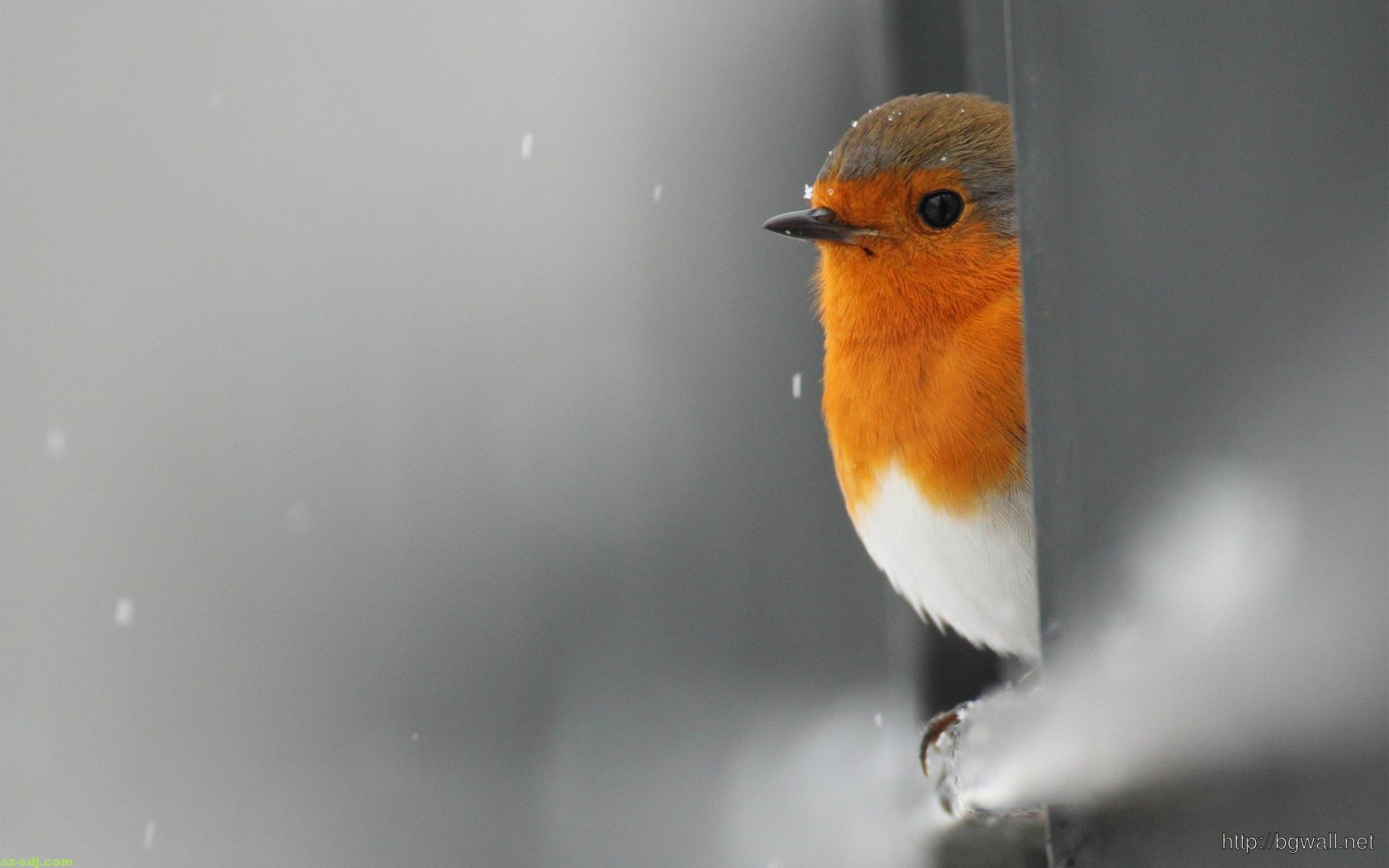 cute-bird-on-rain-snow-wallpaper
