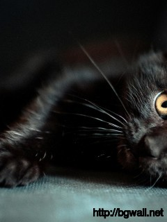 cute-black-cat-wallpaper-pc