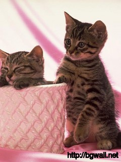 cute-black-kitten-couple-with-pink-background-wallpaper-computer