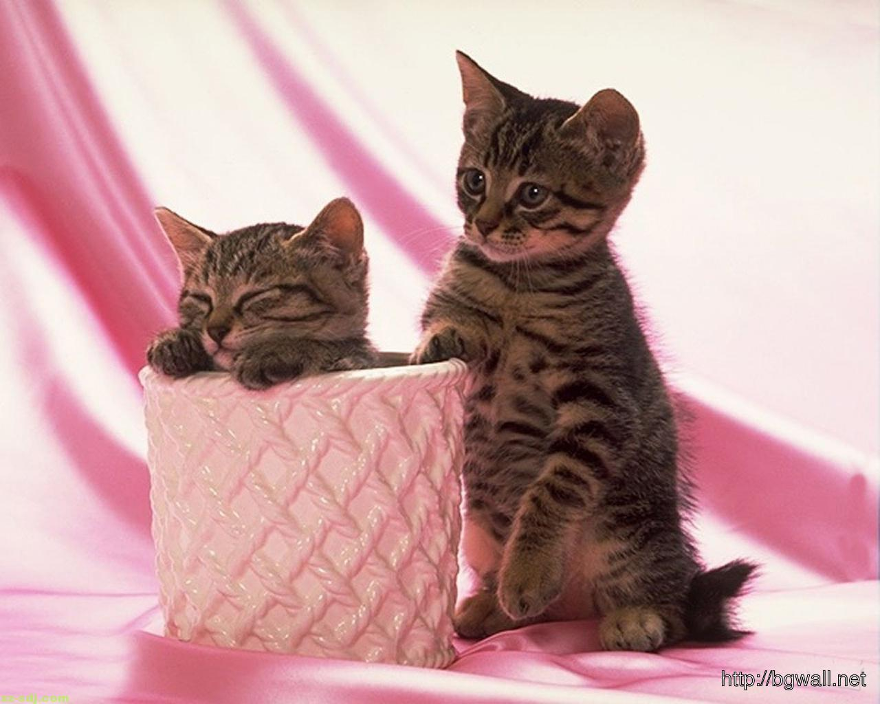 Cute Black Kitten Couple With Pink Background Wallpaper Computer Background Wallpaper Hd