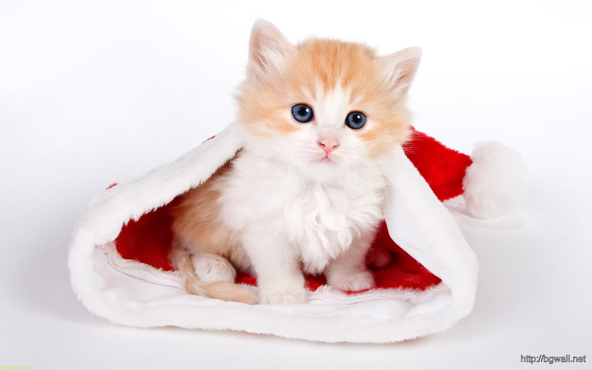 cute-cat-with-santa-hat-wallpaper-widescreen