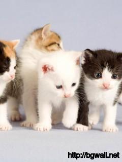 cute-cats-desktop-wallpaper-hd