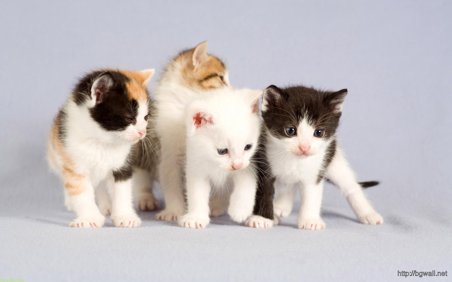 Cute cats desktop wallpaper hd background wallpaper hd - Cute kitten backgrounds for desktop ...