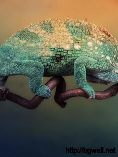 cute-chameleon-wallpaper-desktop