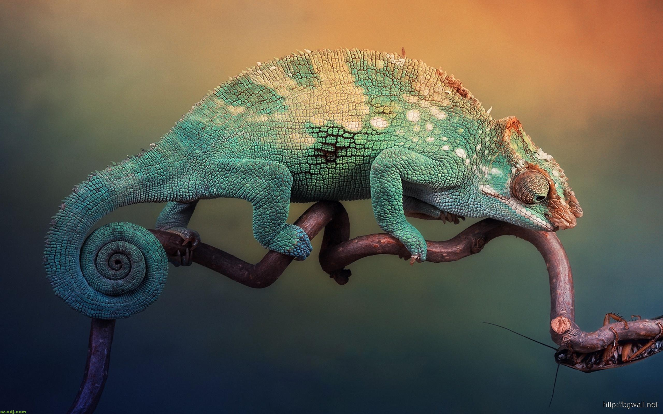 cute-chameleon-wallpaper-desktop